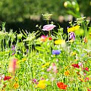 Flower Meadow Poster