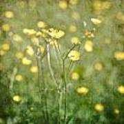 Flower Of A Buttercup In A Sea Of Yellow Flowers Poster