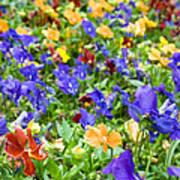 Flower Palette Poster