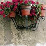 Flower Pots On Old Wall Poster