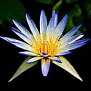 Flower Symmetry Poster