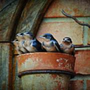 Flowerpot Swallows Poster by Jai Johnson