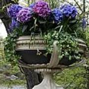 Flowerpot With Hydrangea Poster
