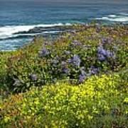 Flowers Along The Shore At La Jolla California No.0203 Poster