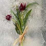Flowers Frozen In Ice Poster
