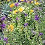 Flowers In Charlottenburg Palace Garden Poster