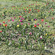 Flowers In Spring Poster