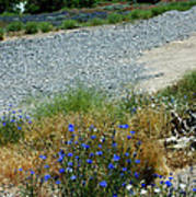 Flowers In The Gold Hill Desert Poster