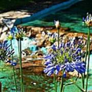 Flowers Poster by Jenny Senra Pampin