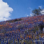 Flowers On A Hill Poster