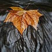 Flowing Leaf Poster