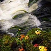 Flowing Stream  Poster