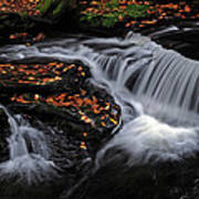 Flowing Through Fall Color Poster