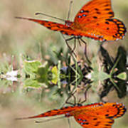 Fluttering Reflections - Butterfly Poster
