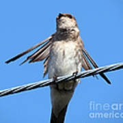 Fluttering Swallow Poster