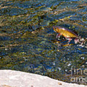 Flying Brook Trout Poster