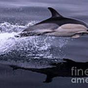Flying Porpoise Poster