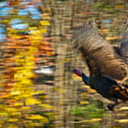 Flying Wild Turkey Escapes Thanksgiving Poster
