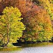 Foliage On The Pond Poster