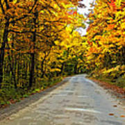 Follow The Yellow Leafed Road Painted Poster
