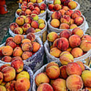 Food - Harvested Peaches Poster