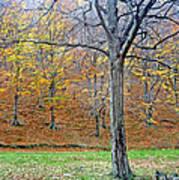 Forest - Jiu Defile Poster