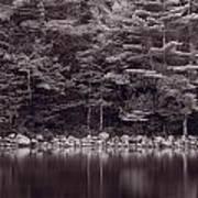 Forest At Jordan Pond Acadia Bw Poster