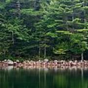 Forest At Jordan Pond Acadia Poster
