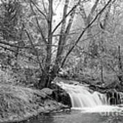 Forest Creek Waterfall In Black And White Poster