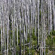 Forest Fire Sticks-2 Poster