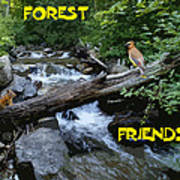 Forest Friends Sharing A Log Over A Creek On Mt Spokane Poster