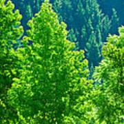 Forest Illuminates In The Sunlight  Poster