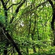 Forest In Denmark Poster