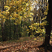 Forest In Fall Poster