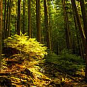 Forest Poster by Matt  Trimble