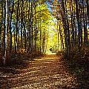 Forest Path In Autumn Poster