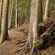 Forest Pathway, Whistler, British Poster