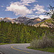 Forest Road In Kananaskis Country Poster by Tatiana Boyle