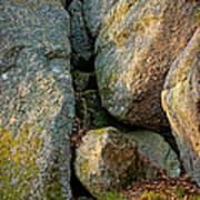 Forest Rocks Poster