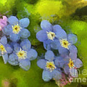 Forget-me-not Flower Poster