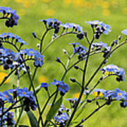Forget-me-nots Poster