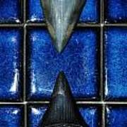 Fossil Great White Shark Teeth Poster