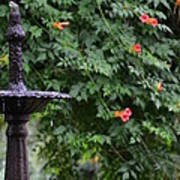 Fountain In The Garden Poster