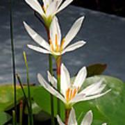 Four Tall Marsh Grass Blooms Poster