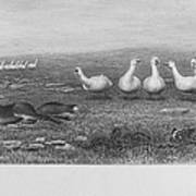 Fox & Geese, 19th Century Poster