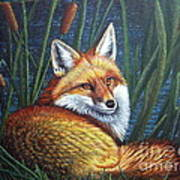 Fox In Cat Tails Poster by Terri Maddin-Miller