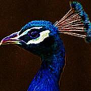 Fractalius Peacock Poster