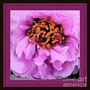 Framed In Purple - Abstract Floral Poster