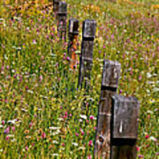 Fredricks Meadow Poster