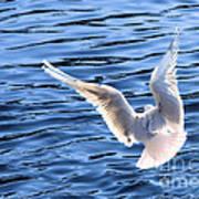 Free As A Bird Poster
